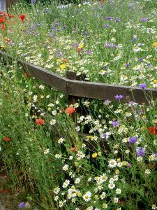 Colourful Planting of Wildflowers by Ron Evans