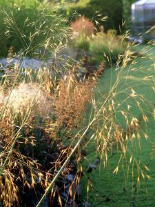 Giant Feather Grass by Ron Evans