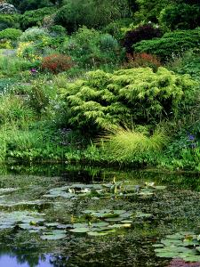 Scree Garden Leading Down to Pond, Shrubs and Conifers, Colourful Perennials and Grass by Ron Evans