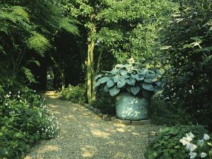 """Shady Border, Foliage Plants and Hosta in Large Container Gravel Path, """"Orchards"""" by Ron Evans"""