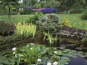 Small Pond with Water Lily, Arum Lily, Umbrella Plant and Curled Pondweed by Ron Evans