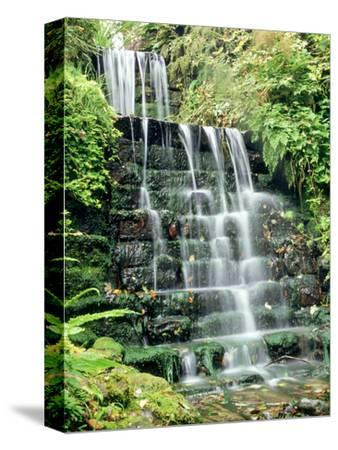 Tiered Waterfall, Moss, Lichen, Ferns