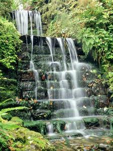 Tiered Waterfall, Moss, Lichen, Ferns by Ron Evans
