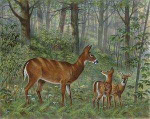 Deer Family I by Ron Jenkins