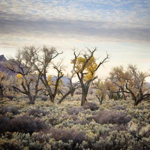 Desert Landscape With Cottonwood Trees And Sagebrush by Ron Koeberer