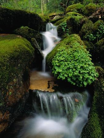 Cascading Stream in Great Smoky Mountains by Ron Watts