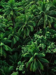 Lush Plants in Hawaiian Rainforest by Ron Watts