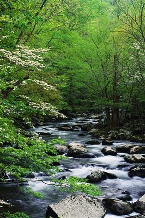Stream in Lush Forest
