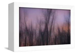 Abstract of Trees at Sunset , Upper Mississippi, Le Claire Iowa by Rona Schwarz
