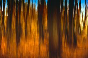 An Impressionistic in Camera Blur of Colorful Autumn Trees by Rona Schwarz
