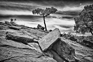 Australia, New South Wales, Outback, Mutawintji National Park by Rona Schwarz