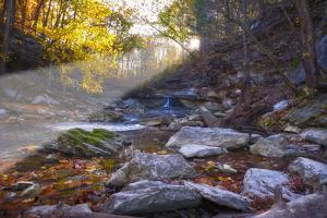 Mccormick Creek Sp Canyon in Early Morning Sun, Spencer, Indiana by Rona Schwarz