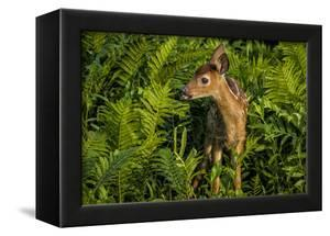 Minnesota, Sandstone, Close Up of White Tailed Deer Fawn in the Ferns by Rona Schwarz