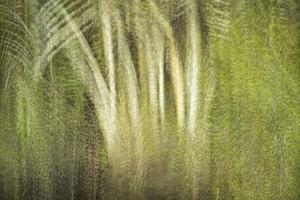 Multiple Exposure of Florida Palm Trees in Water by Rona Schwarz