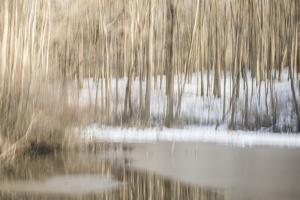 Multiple Exposure of Trees in Winter, Eagle Creek Park, Indiana by Rona Schwarz
