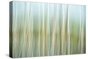 Nature Abstract, Celery Bog Wetlands, West Lafayette, Indiana by Rona Schwarz