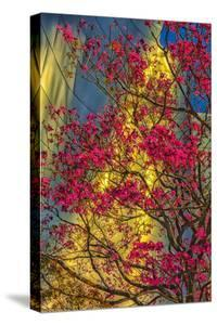 USA, Los Angeles, Ca, the Disney Center in Spring by Rona Schwarz