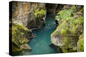 USA, Montana, Glacier National Park. Avalanche Creek by Rona Schwarz