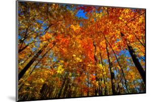 USA, West Lafayette, Indiana, Trees at the Celery Bog in Autumn by Rona Schwarz
