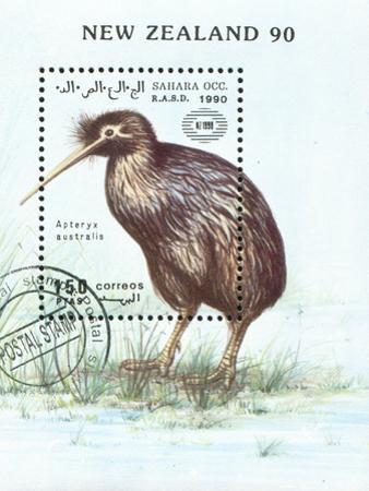 Kiwi Bird by rook76