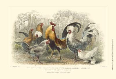 Roosters & Hens-Julius Stewart-Art Print