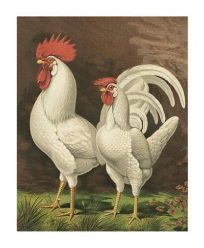Roosters VI-Cassell-Art Print