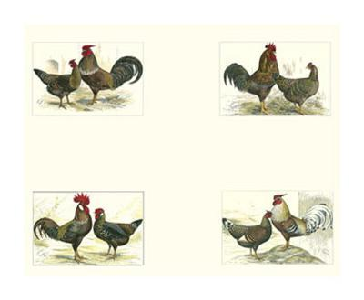 Roosters--Art Print