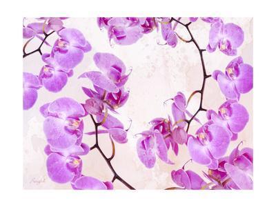 Fluttering Orchid II