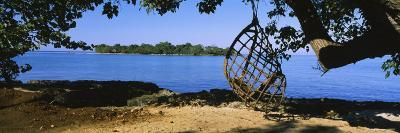 Rope Swing Hanging from a Tree on the Beach, Negril, Jamaica--Photographic Print