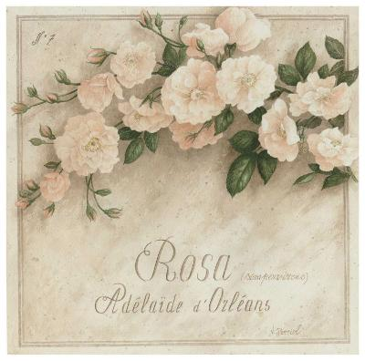 Rosa, Adelaide d' Orlean-Vincent Perriol-Art Print