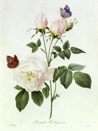 https://imgc.artprintimages.com/img/print/rosa-bengale-the-hymenes_u-l-o1xoi0.jpg?p=0