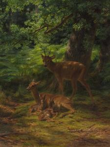 Deer in Repose, 1867 by Rosa Bonheur