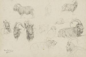 Dix études de chèvres, un mouton, un perroquet by Rosa Bonheur