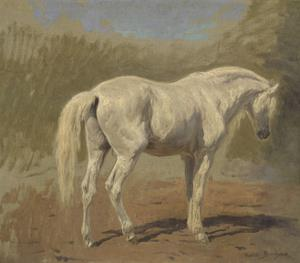 Etude de cheval blanc by Rosa Bonheur