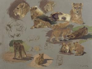 Etude de lions, de lionnes et de lionceaux, 17 esquisses by Rosa Bonheur