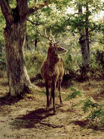 Stag on Alert in Wooded Clearing