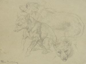 Trois études de loups by Rosa Bonheur