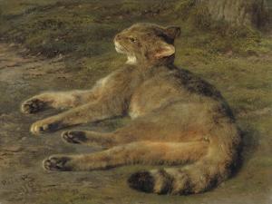 Wild Cat, 1850 by Rosa Bonheur