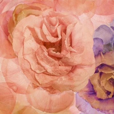 Rosa Cuadrada-Moises Levy-Giclee Print
