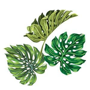 3 Vector Tropical Palm Leaves. Realistic Drawing in Vintage Style. Isolated on White. Monstera Leav by rosapompelmo