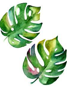 Vector Monstera Leaves by rosapompelmo