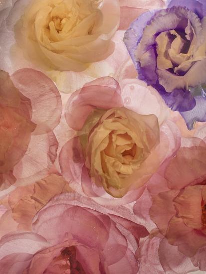 Rosas Compo 2-2-Moises Levy-Giclee Print
