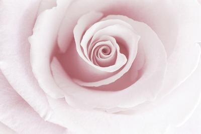 Rose Abstract-Anna Miller-Photographic Print