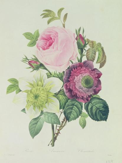 Rose, Anemone and Clematide-Pierre-Joseph Redout?-Giclee Print