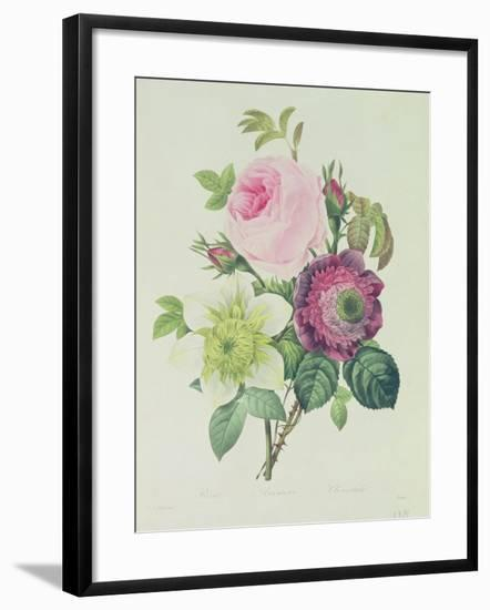 Rose, Anemone and Clematide-Pierre-Joseph Redouté-Framed Giclee Print
