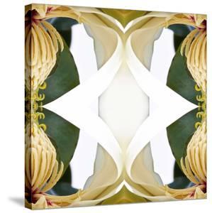 Baroque Magnolia2 by Rose Anne Colavito