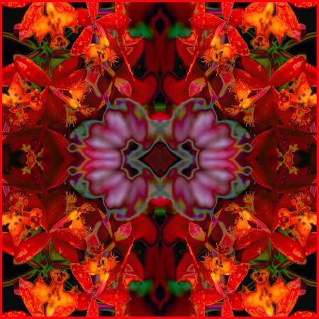 rose-anne-colavito-fire-orchids