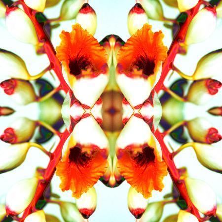 rose-anne-colavito-ginger4