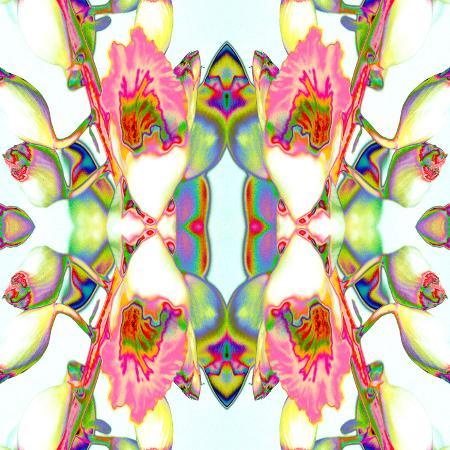 rose-anne-colavito-ginger
