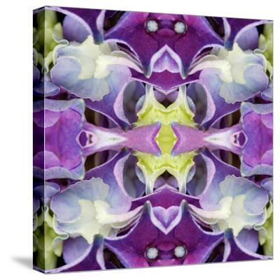 Hydrangea2 by Rose Anne Colavito